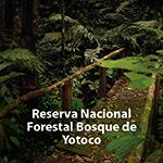 Reserva nacional forestal Bosque de Yotoco