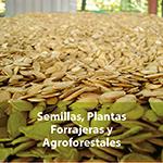 Semillas, plantas forrajeras y agroforestales